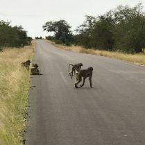 kruger-national-park-safari-south-africa-3