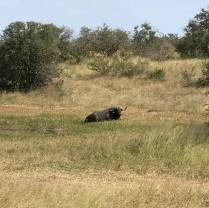 kruger-national-park-safari-south-africa-6